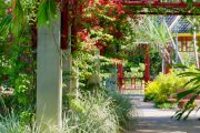 Decorate Your Pergola With Climbing Plants