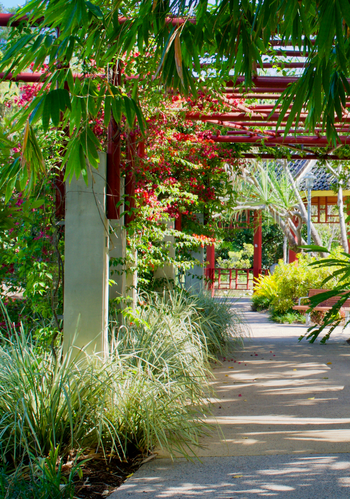 Decorate Your Pergola With Climbing Plants - ADC Hardscapes